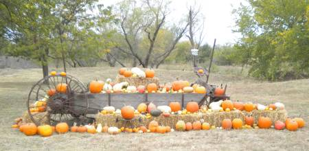 Wichita pumkin patch
